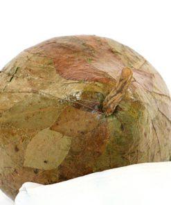 Skulptur päron papier maché av lovtrads-blad ovansida